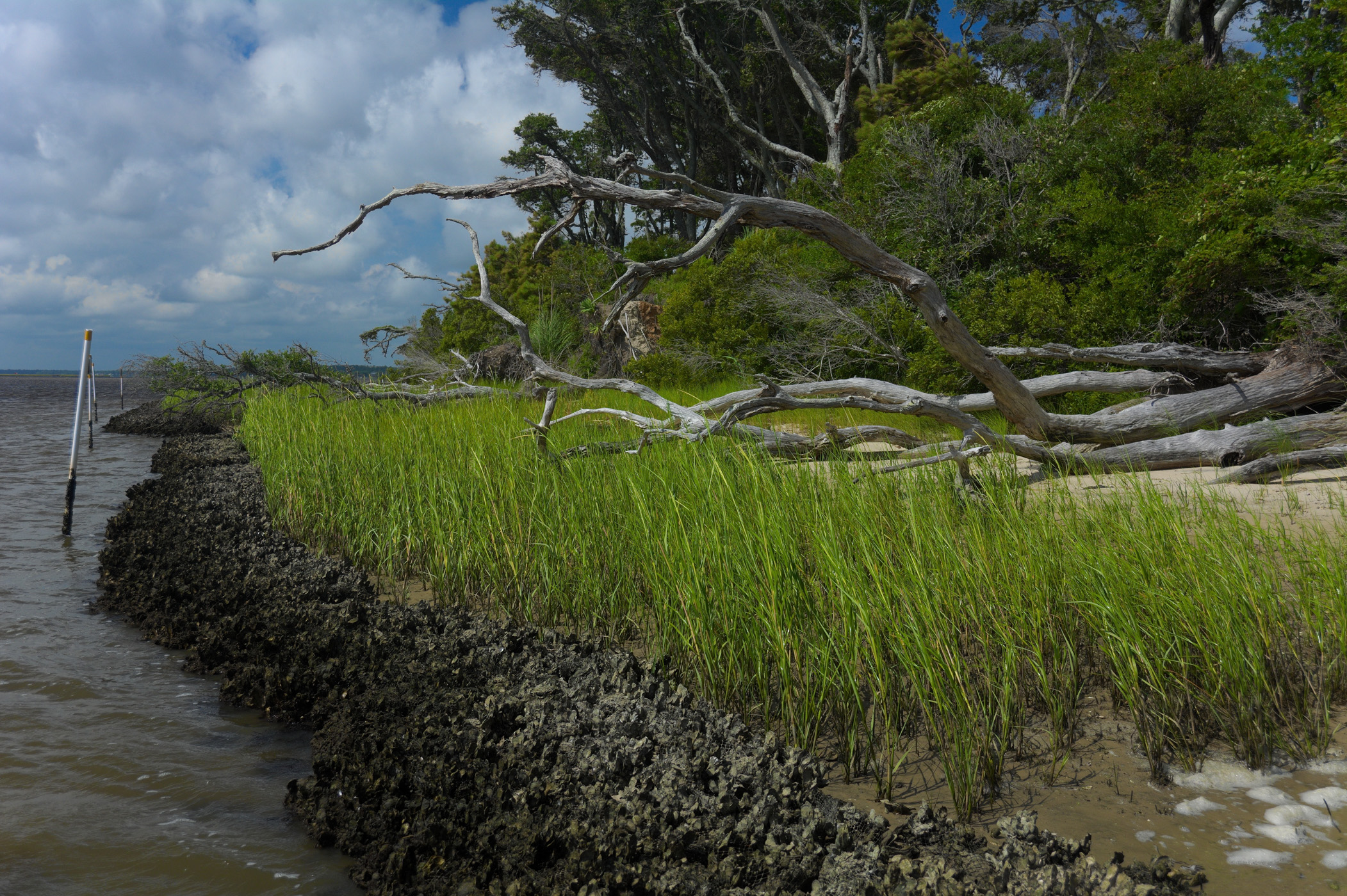 Learn About Living Shorelines